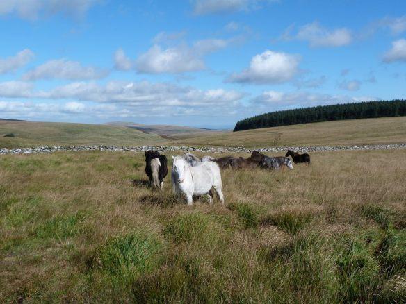 waiting wild horses